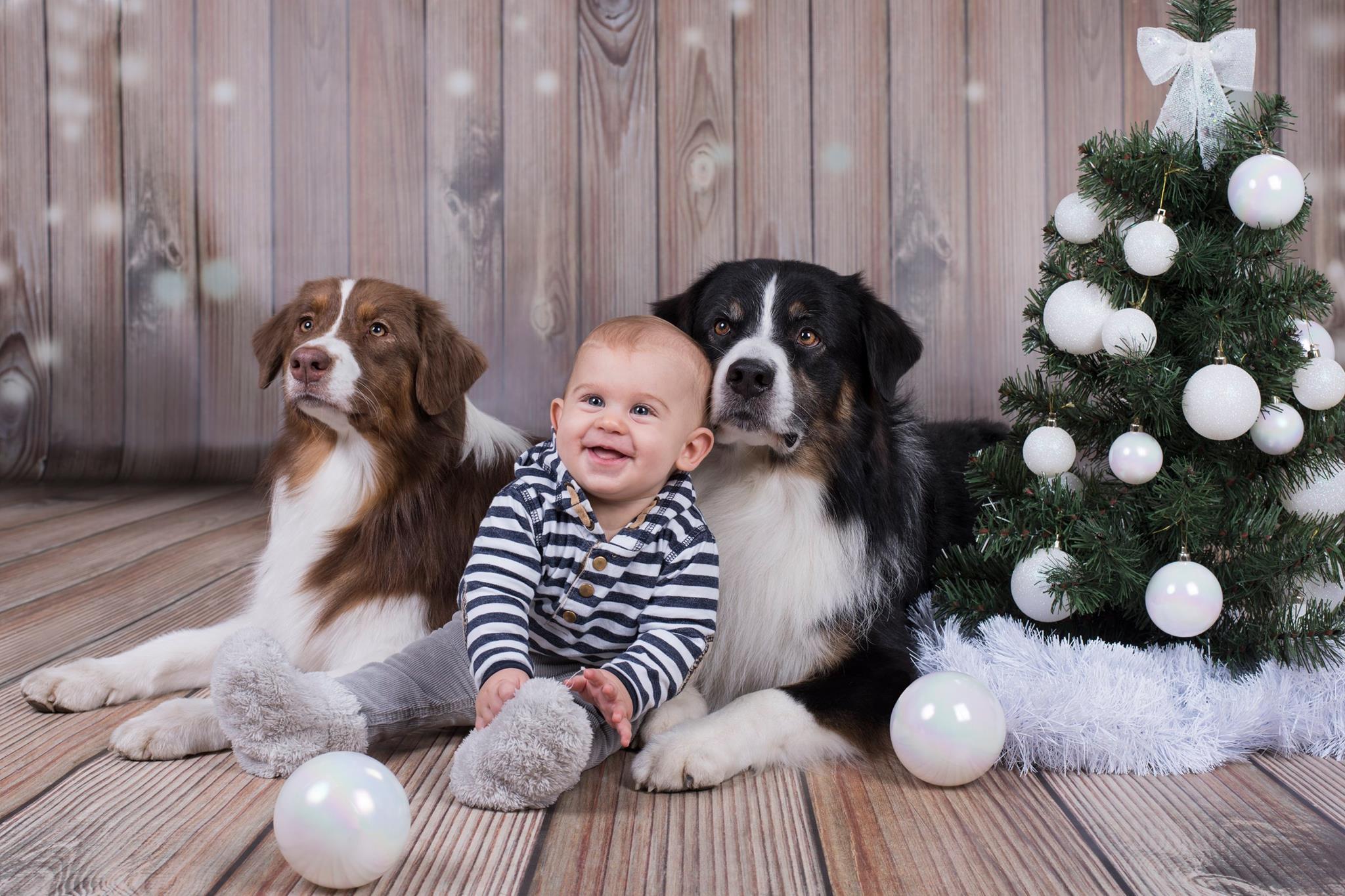за кучетата и децата