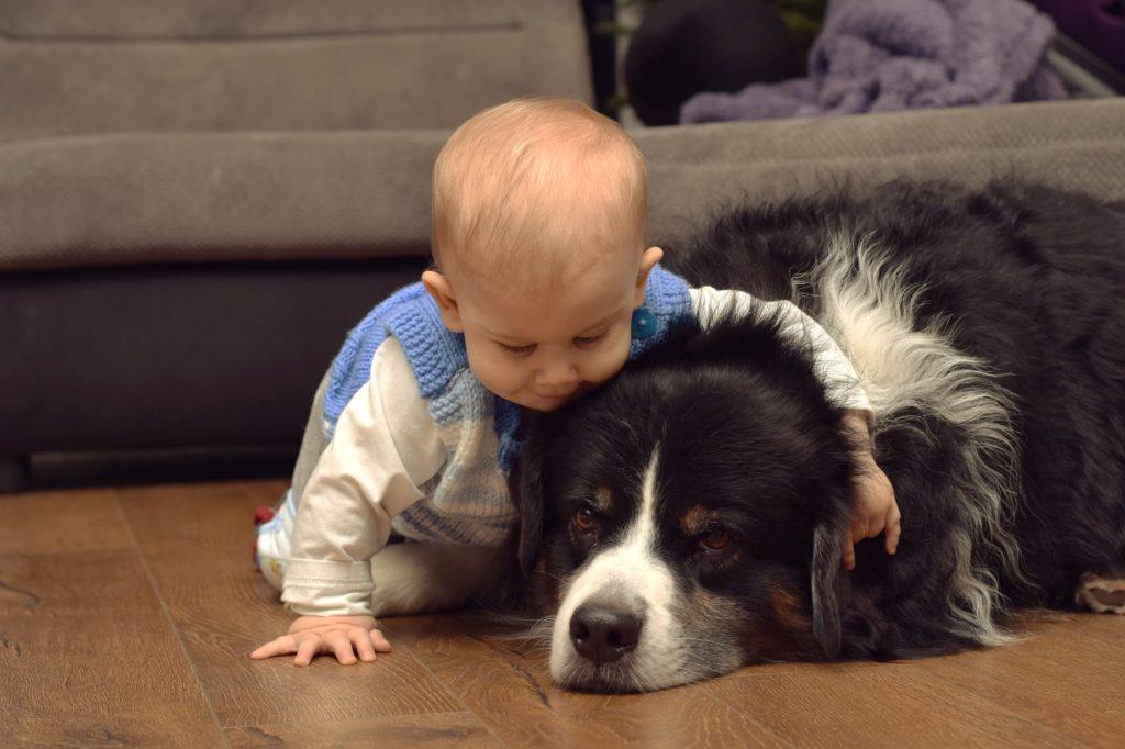 За кучеата и децата