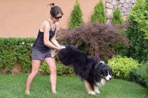 Ръчна количка с куче