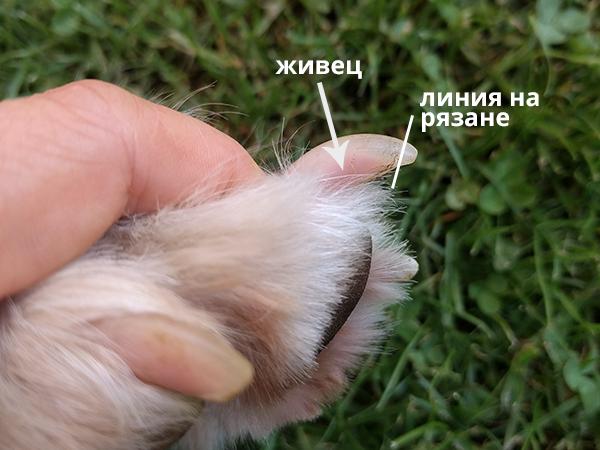 dog nail photo