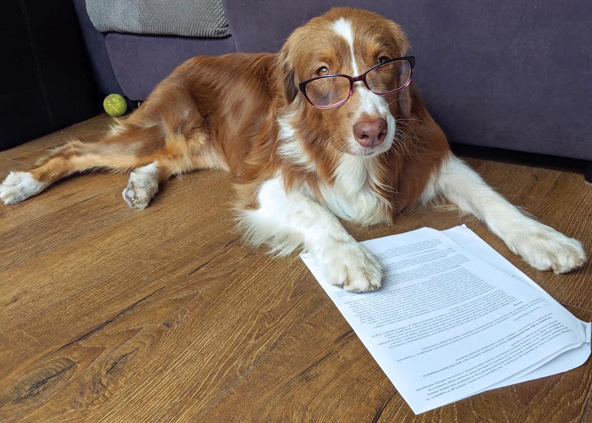 регистриране на куче