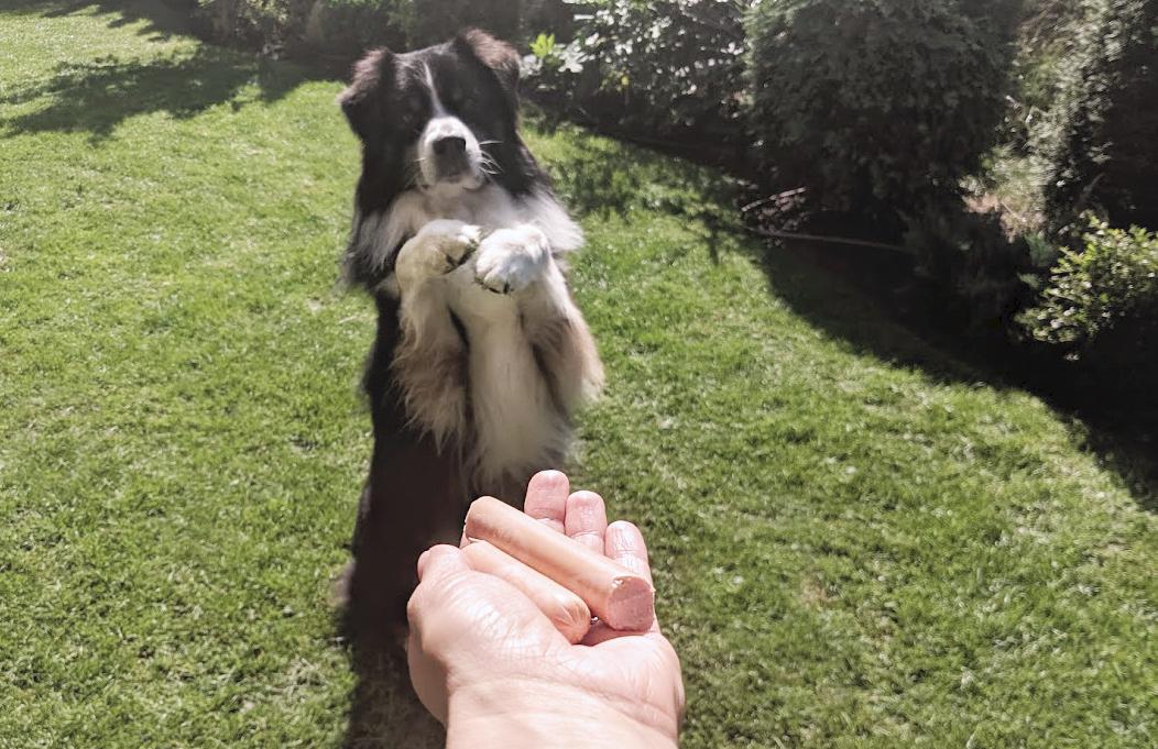 Кучешки наградки